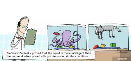 Cartoon auf dem zwei mit Wasser gefüllte Aquarien zu sehen sind. Im einen Aquarium befindet sich ein Otcopus, der mit seinen Greifarmen bunte Bauklötze sortiert. Im zweiten Aquarium schwimmt eine nicht mehr ganz so lebendige Katze an der Oberfläche, die Bauklötze liegen bunt zerstreut auf dem Boden des Aquariums. Im Vordergrund steht ein Mann, der sich Notizen auf einem Klemmbrett macht. Der Text zum Cartoon lautet: Professor Zapinsky proved that the squid is more intelligent than the housecat when posed with puzzles under similar conditions.